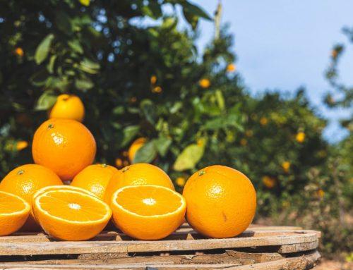 De dónde son las mejores naranjas de España
