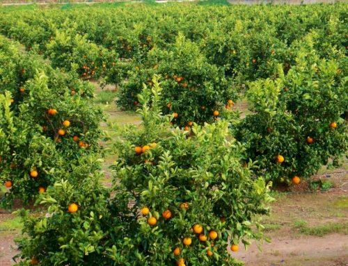 Características y beneficios de la producción integrada
